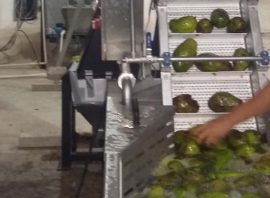 Avocado oil extraction